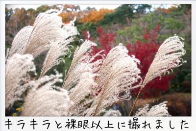 2013-11-kouraku05.jpg
