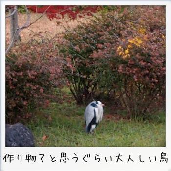 2013-11-kouraku06.jpg