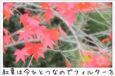 2013-11-kouraku09.jpg
