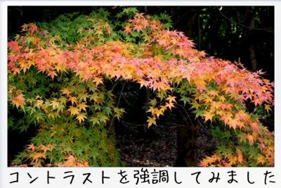 2013-11-kouraku11.jpg