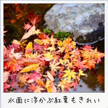 2013-11-kouraku14.jpg