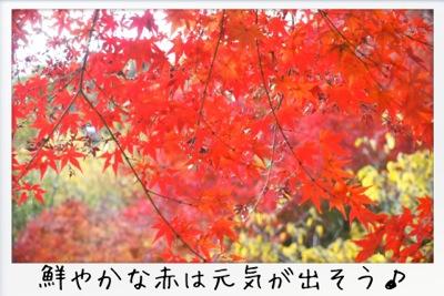 2013-11-kouraku15.jpg
