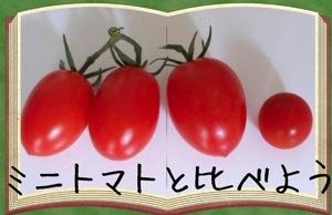 20130723tomato4.jpg