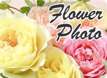 バラと草花の写真