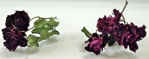dry-rose02.jpg
