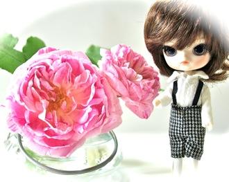 rose11-0516-1.jpg